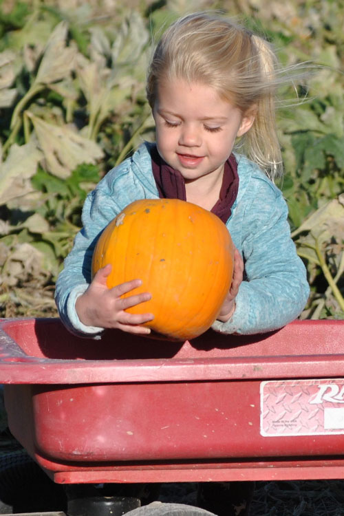 Visit The Walters' Farm Pumpkin Patch and Corn Maze near Wichita, Kansas to pick-your-own pumpkin from our pumpkin patch!