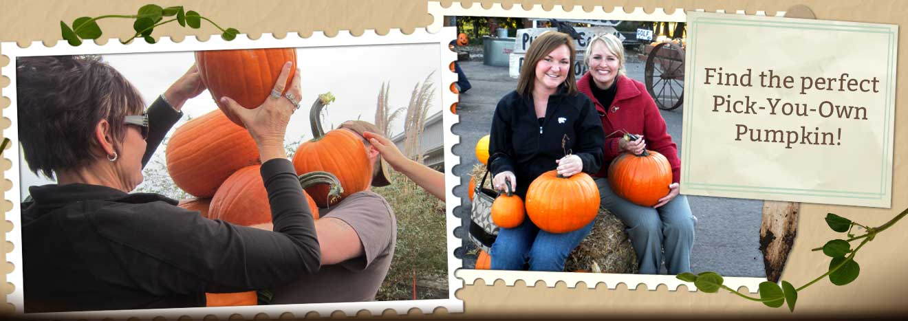 Admission At The Walters Farm Pumpkin Patch Corn Maze And Country